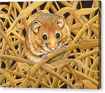 Gerbil Canvas Print - Edible Dormouse by Ditz
