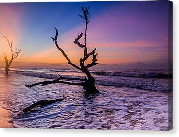 Edisto Dawan Canvas Print by RC Pics