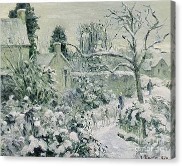 Effect Of Snow With Cows At Montfoucault Canvas Print by Camille Pissarro