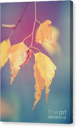 Effeuillantine - 17a Canvas Print by Variance Collections