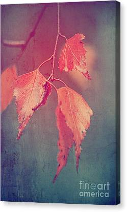 Effeuillantine - 46 Canvas Print by Variance Collections