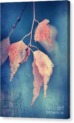 Effeuillantine -47t3 Canvas Print by Variance Collections