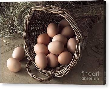 Eggs In Wicker Cornucopia Canvas Print