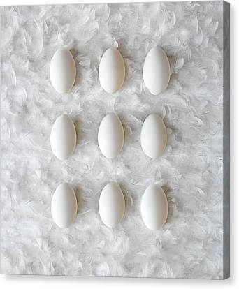 Eggs On Feathers, Conceptual Image Canvas Print by Paul Biddle
