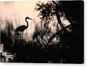 Egrets Canvas Print - Egret At Dusk 11 by Charles Shedd