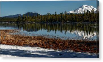 Canvas Print featuring the photograph Egret At Lava Lake by Cat Connor