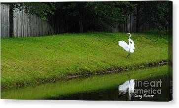Egret Dance Canvas Print by Greg Patzer