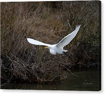 Canvas Print featuring the photograph Egret In Flight by George Randy Bass