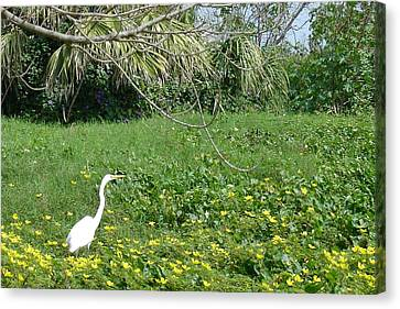 Egret In Flowers Canvas Print by Geralyn Palmer