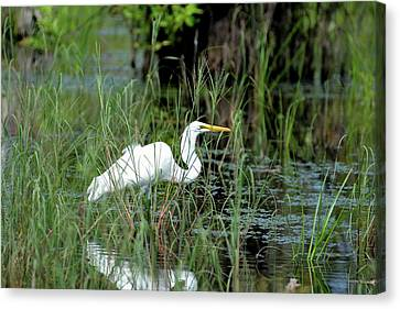 Egret In Grasses Canvas Print