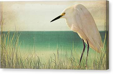 Egret In Morning Light Canvas Print by Christina Lihani