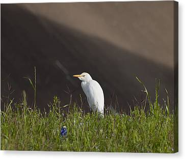Canvas Print featuring the photograph Egret In The City by Joshua House