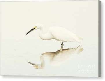 Egret In Vanilla Tones Canvas Print by Ruth Jolly