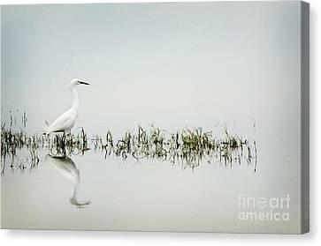 Egret Canvas Print by Jim  Calarese