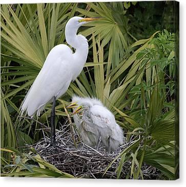 Egret Nest Canvas Print