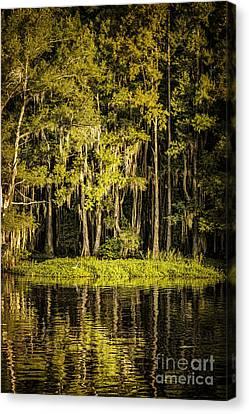 Egret On Caddo Lake II Canvas Print