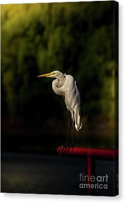 Canvas Print featuring the photograph Egret On Deck Rail by Robert Frederick