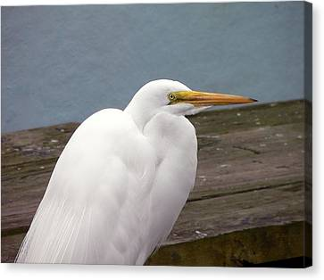 Egret On The Dock Canvas Print by Al Powell Photography USA