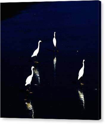 Egret Reflections Canvas Print by David Lane