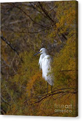 Egret Surrounded By Golden Leaves Canvas Print by Ruth Jolly
