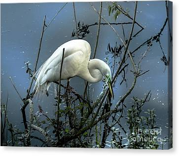 Canvas Print featuring the photograph Egret Under Marina Lights by Robert Frederick