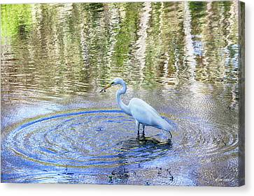 Egret With A Fish Canvas Print