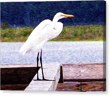 Egretful Morning Canvas Print by Laura Brightwood