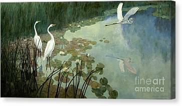 Egrets In Summer Canvas Print by Celestial Images