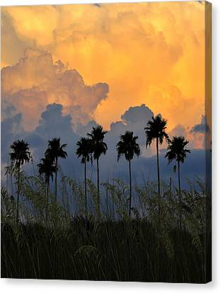 Eight Palms Canvas Print by David Lee Thompson