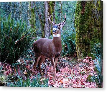 Eight Point Buck Canvas Print by Tim Mattox