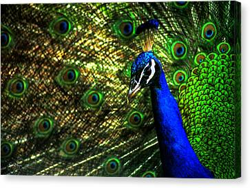 Canvas Print featuring the photograph Eighteen Eyes by Wayne King