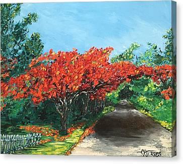 El Flamboyan En Mi Camino Canvas Print by Melissa Torres