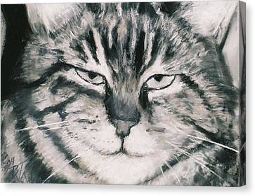 El Gato Canvas Print by Billie Colson