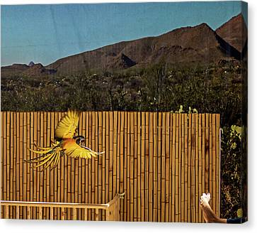 El Paso Zoo - Macaw Parrot Canvas Print by Allen Sheffield