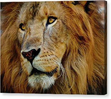 Canvas Print featuring the photograph El Rey by Skip Hunt