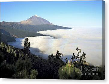 Alberi Canvas Print - El Teide Above The Clouds by Luigi Morbidelli