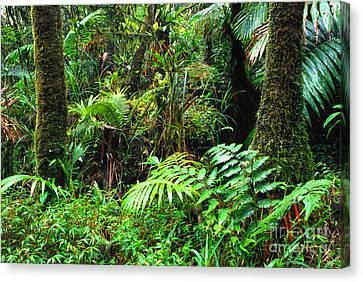 El Yunque Lush Vegetation Canvas Print by Thomas R Fletcher