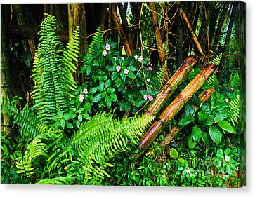 El Yunque National Forest Ferns Impatiens Bamboo Mirror Image Canvas Print by Thomas R Fletcher