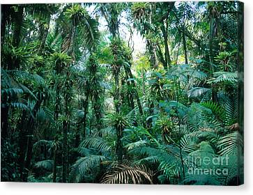 El Yunque National Forest Canvas Print by John Kaprielian