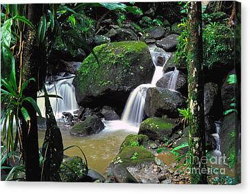 El Yunque Canvas Print - El Yunque National Forest Waterfall by Thomas R Fletcher