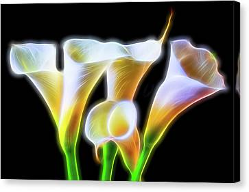 Electric Glowing Callas  Canvas Print by Garry Gay