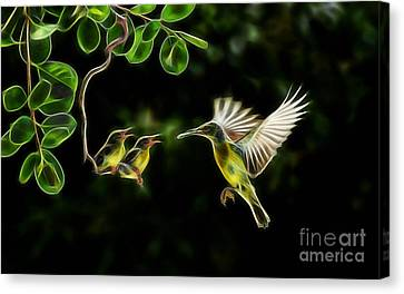 Electric Hummingbird Wall Art Collection Canvas Print