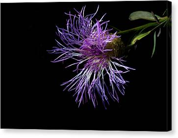 Electric Purple Canvas Print by Eugene Campbell