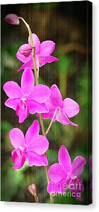 Elegance In Nature Canvas Print by Sue Melvin