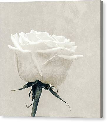 Elegance In White Canvas Print by Wim Lanclus