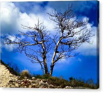 Wind Blown Tree Canvas Print - Elegance Of Time  by Karen Wiles