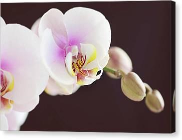 Elegant Beauty Canvas Print by Dhmig Photography