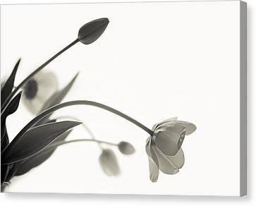 Elegant Bow Canvas Print by Maggie Terlecki
