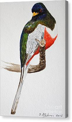 Elegant Trogon Canvas Print by Stanton Allaben
