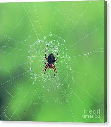Elegant Web With Spider Dry Brush Effect Canvas Print